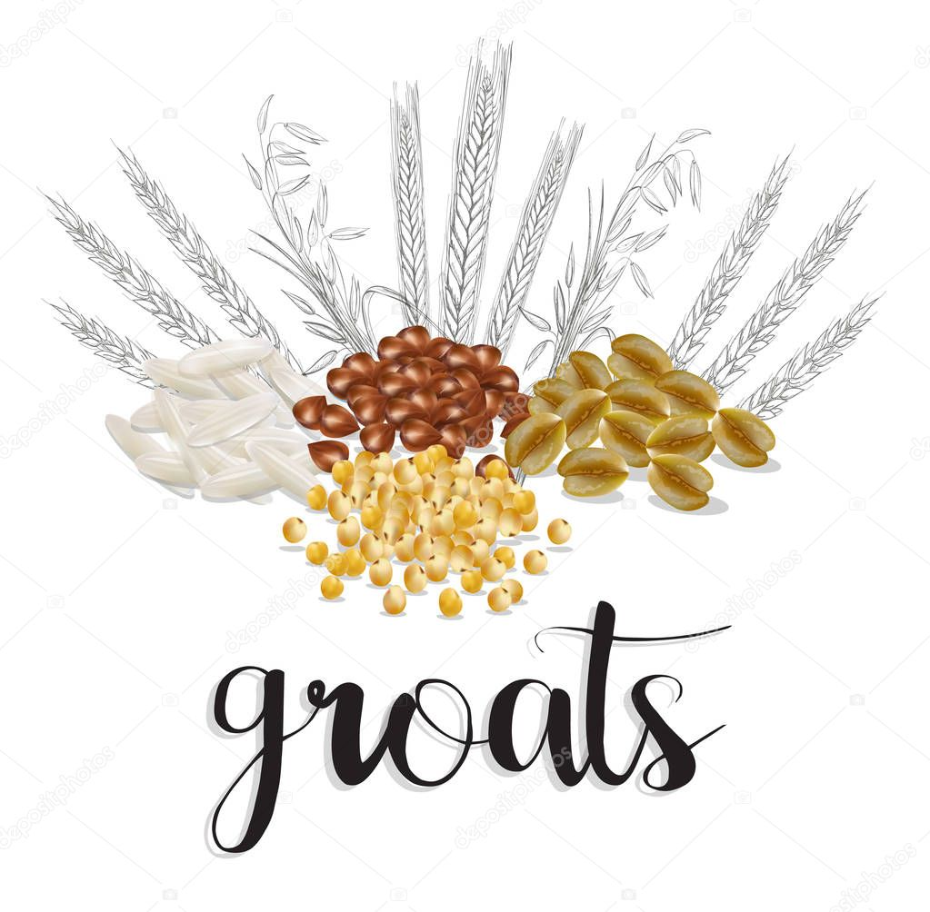 cereals and grains. vector illustration