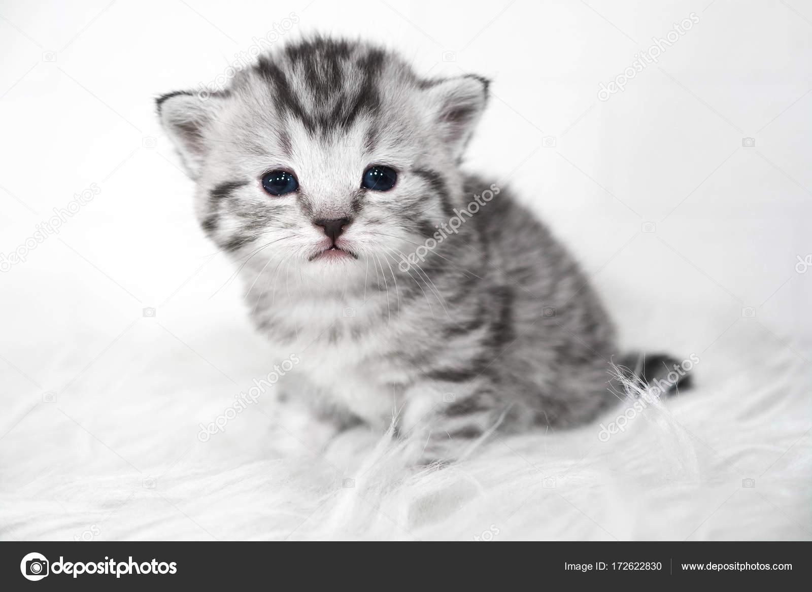 μαύρο μωρό μουνί φωτογραφίες