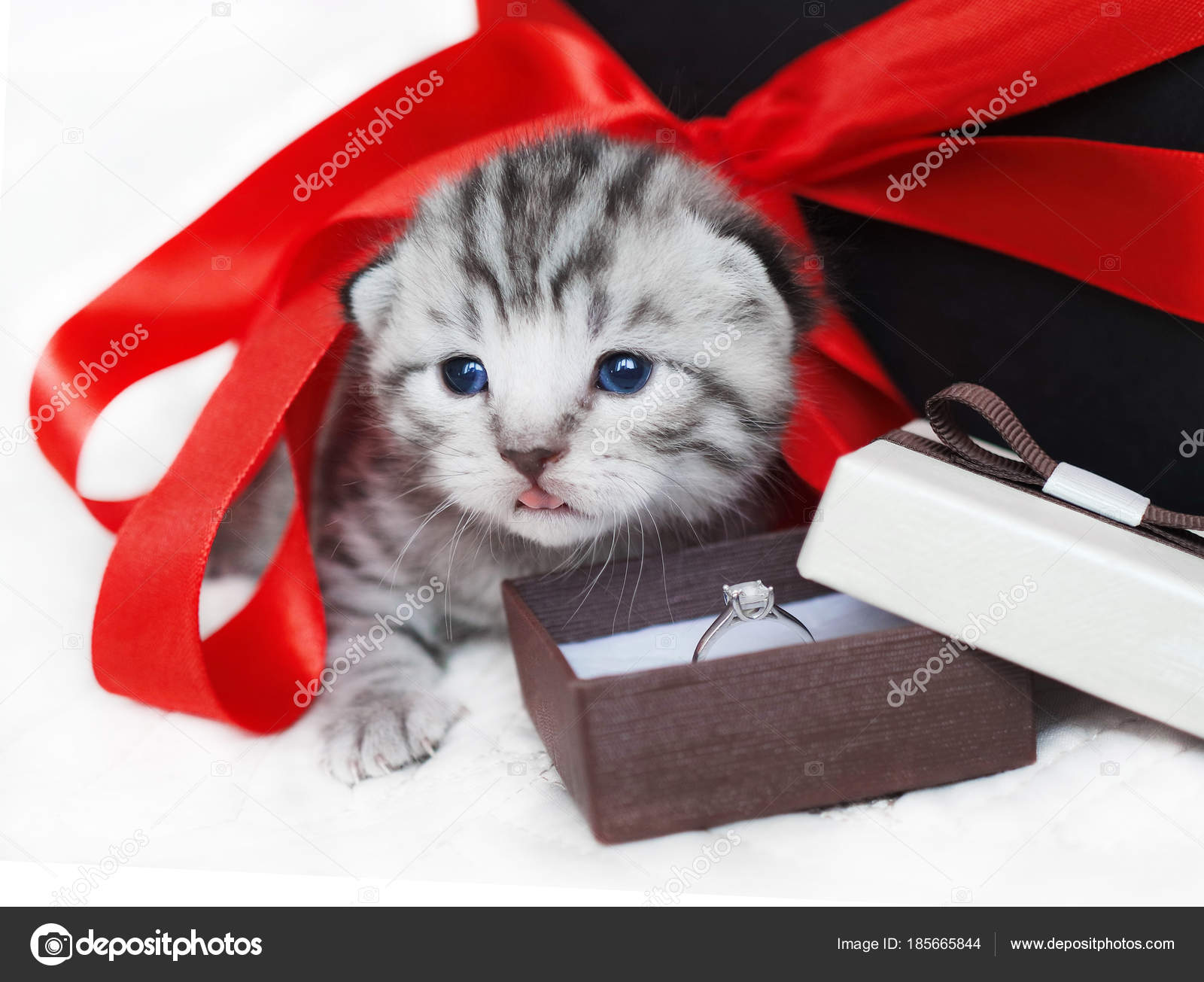Поздравления подарок котенок фото 645