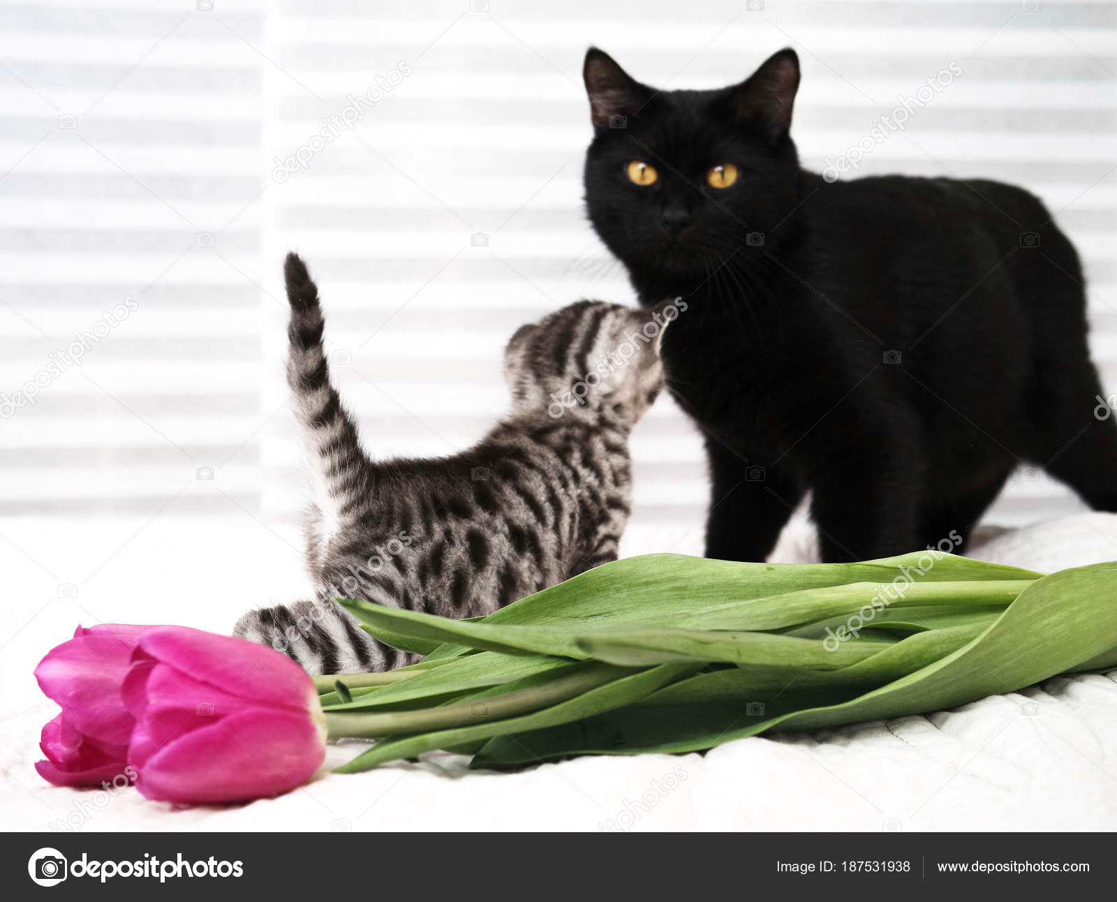 černá kočička na eben chlupatý kočička kurva
