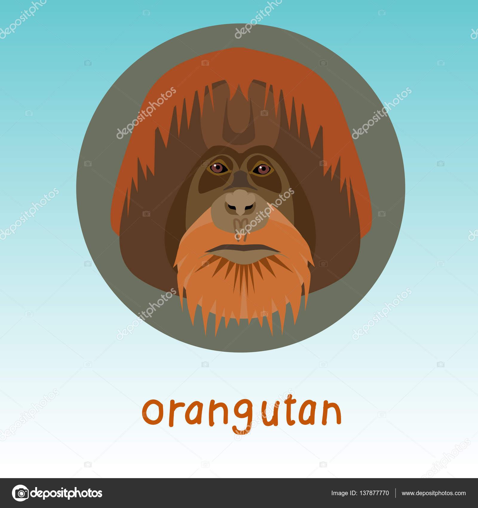 Orang-Utan Affe Gesicht — Stockvektor © Ann.and.Pen #137877770