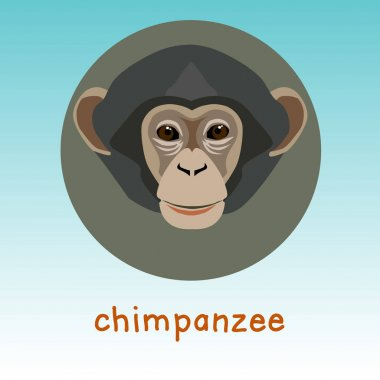 Chimpanzee monkey icon