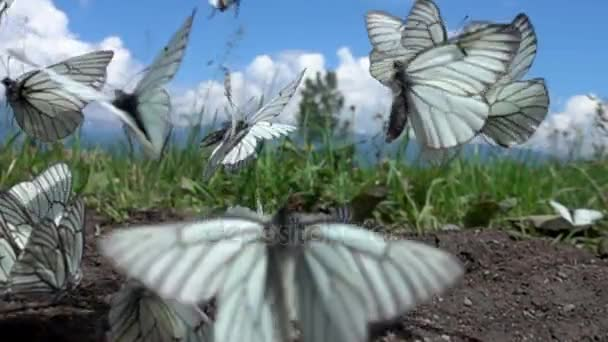mnoho bílých motýli letící od země do nebe