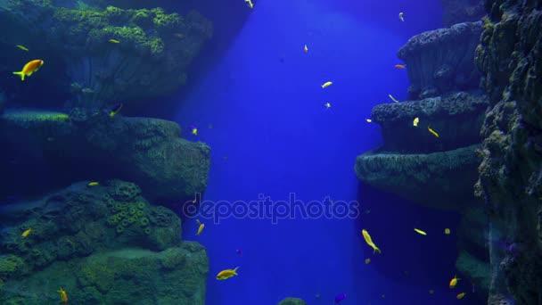Hejno cichlid ryb