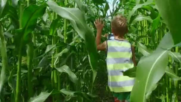 Slow motion: mladí kluci běží mezi velké zelené kuří oka nebo kukuřice během slunečného letního dne