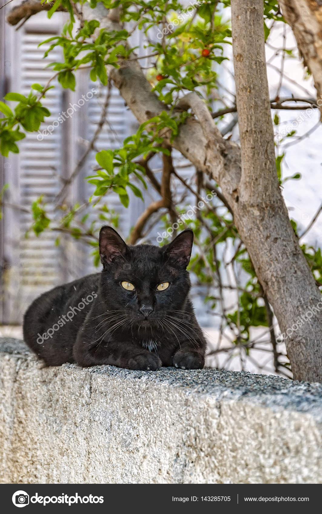 černá ostrov kočička