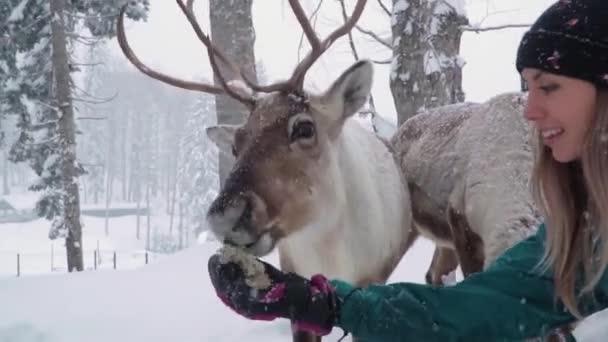 Síközpontok szórakoztatására. Egy fiatal nő és egy szarvas a téli erdőben. A nő szarvasokat etet. A lány szarvasokat etet. Szarvasgazdaság.