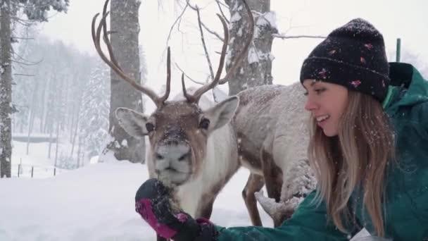 Síközpontok szórakoztatására. Egy fiatal nő és egy szarvas a téli erdőben. A nő szarvasokat etet. Lányetető szarvas.