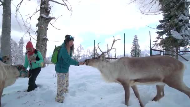 A barátok jól érzik magukat a sípályán. Síközpontok szórakoztatására. A karácsonyi vakáció szentélye. A boldog nők kinyújtják a kezüket és szarvast etetnek nagy szarvakkal egy szarvas farmon a téli erdőben.