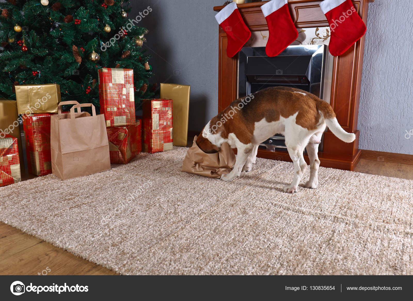 Süße Beagle prüft Weihnachtsgeschenke vor dem Kamin in — Stockfoto ...