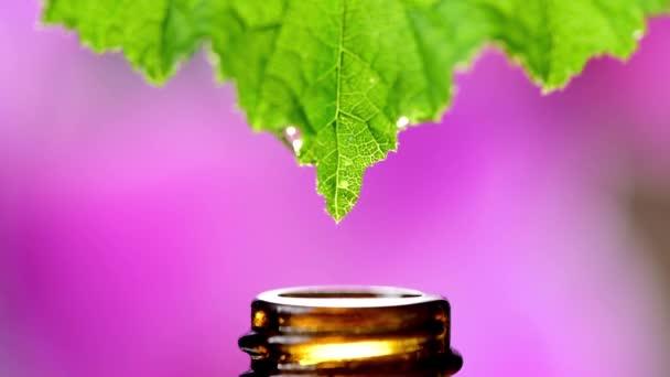 leeső cseppek egy gyógynövényből egy orvosi palackba