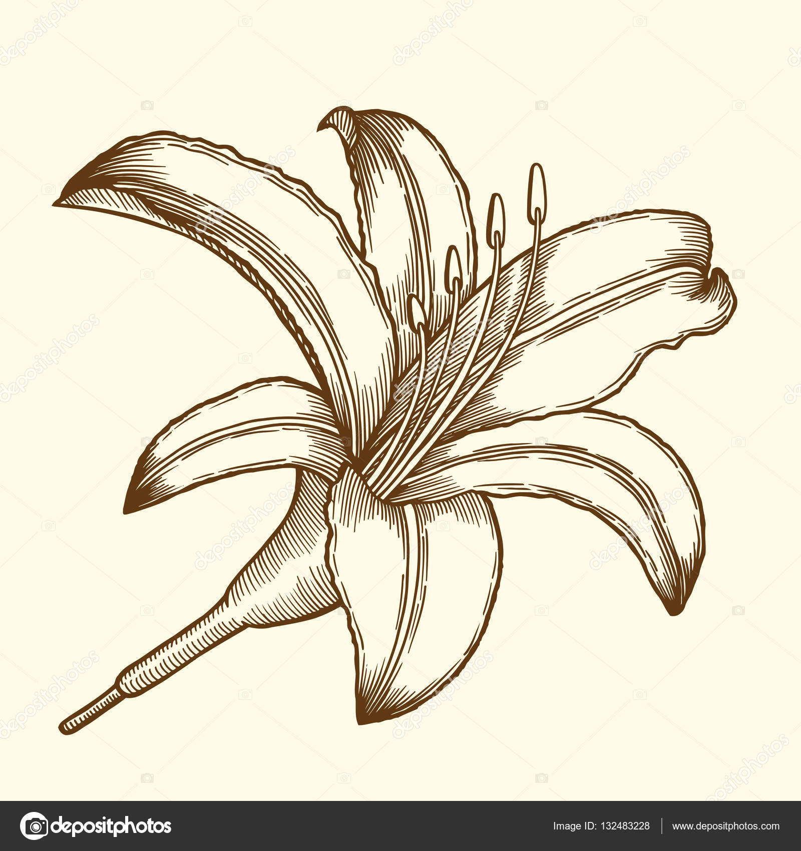 Beautiful flower lily stock vector frescomovie 132483228 beautiful flower lily painted in a graphic style points and lines a great figure for a tattoo vector by frescomovie izmirmasajfo