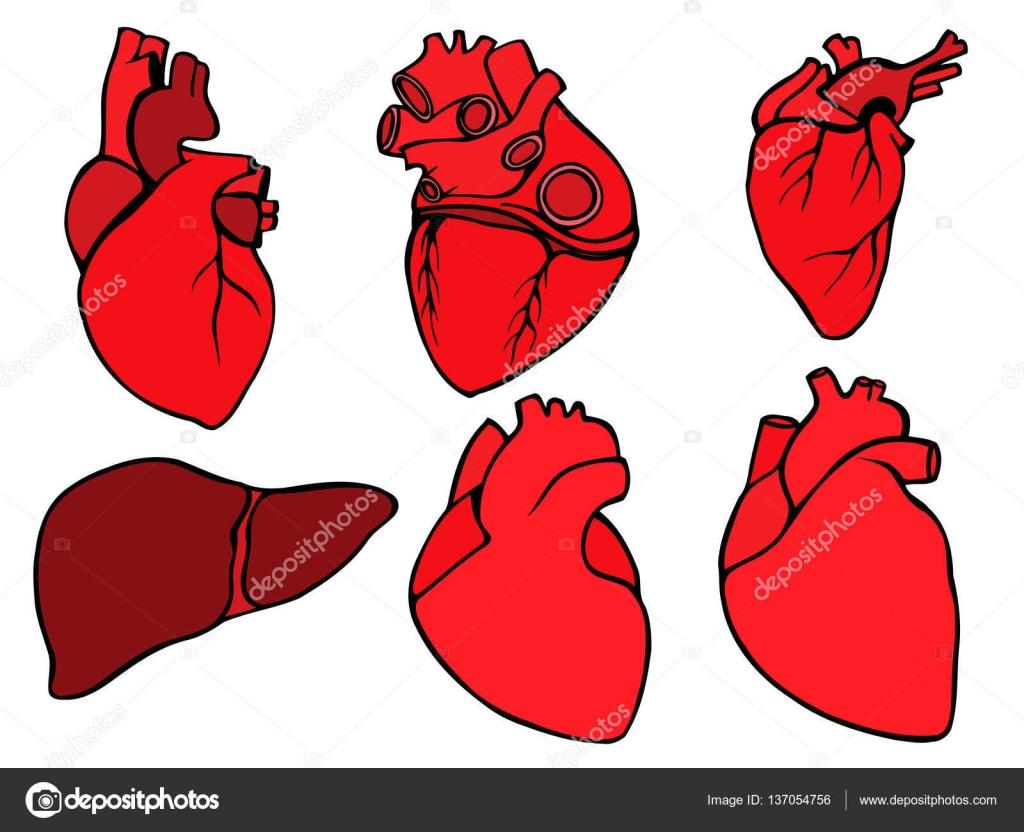 Imágenes Ilustraciones De Corazones Humanos Icono Del Corazón