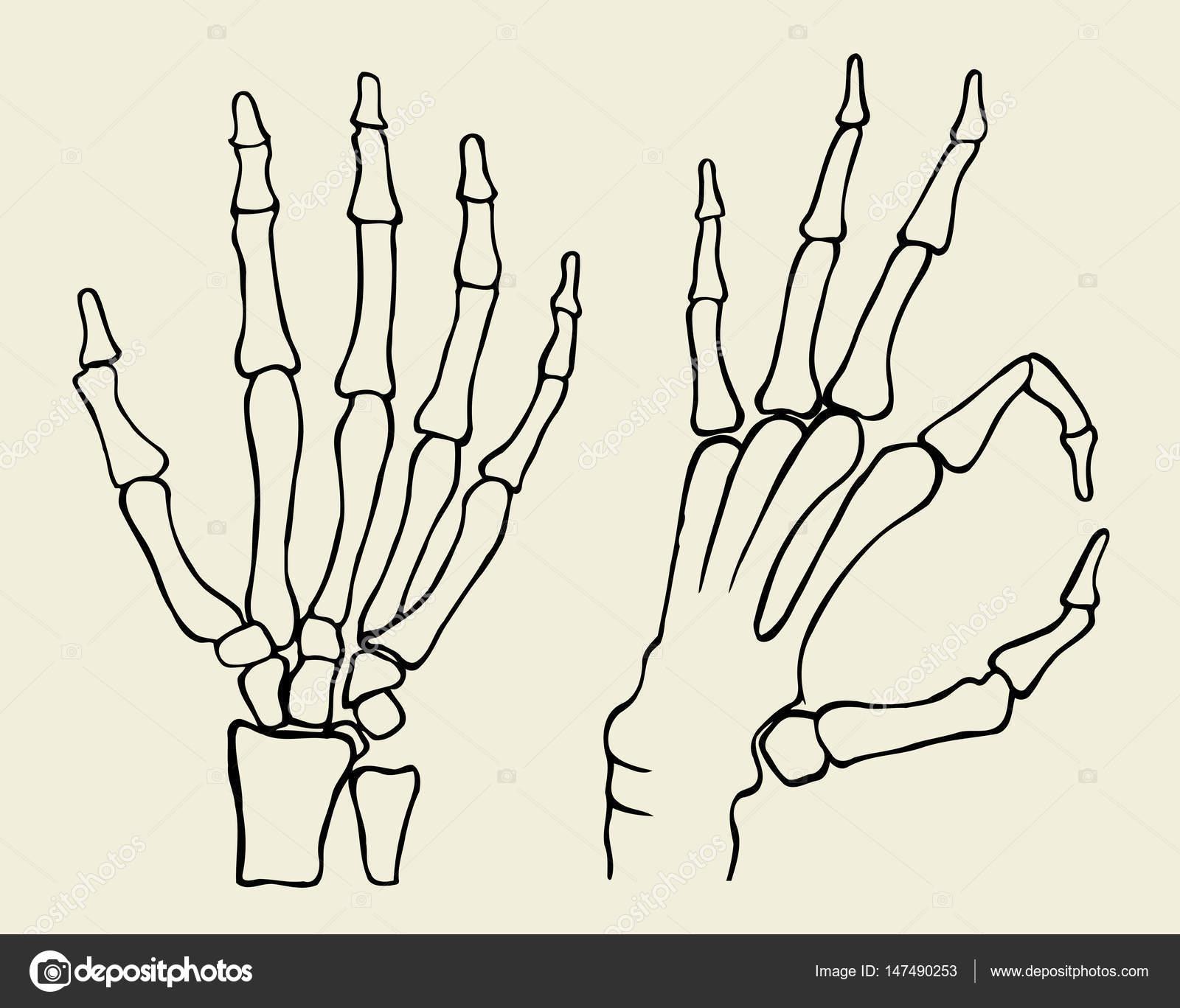 conjunto de mano esqueleto — Vector de stock © frescomovie #147490253