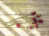 mrtvá růže na dřevo