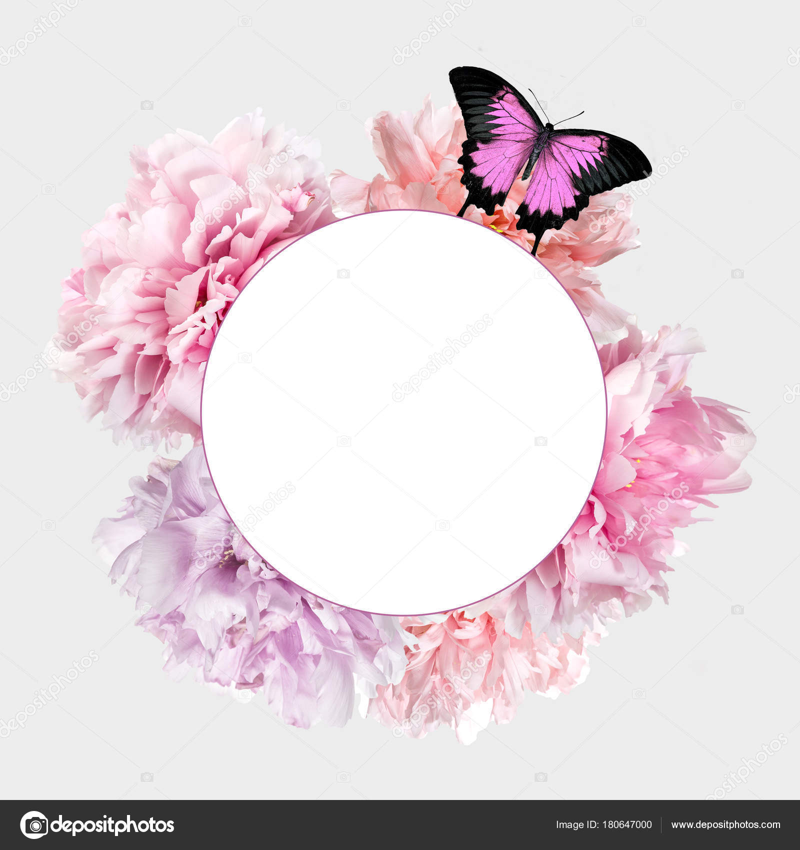 Pink Peony Flowers Butterfly Frame Copy Space — Stock Photo ...