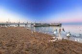 Fotografie Schwäne am Pier in am Baltischen Meer in der Abenddämmerung, Polen