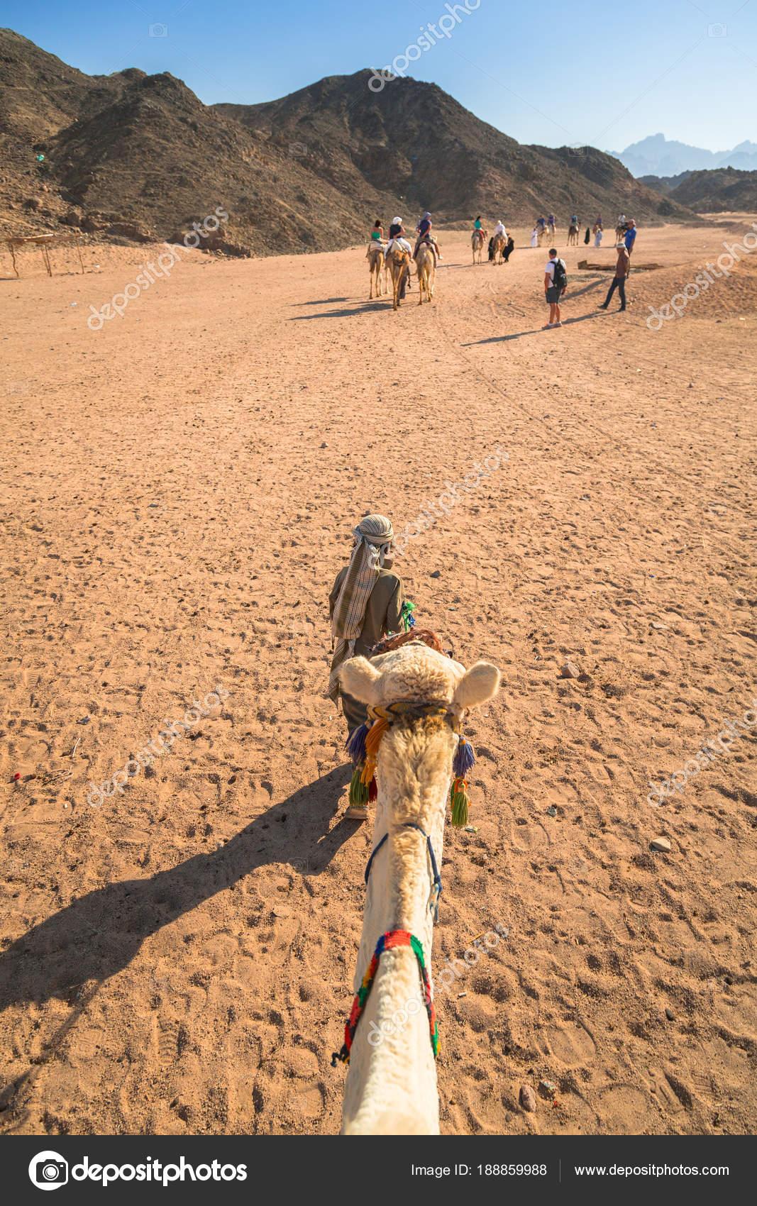Hurghada Egypt April 2013 Camel Ride Desert Hurghada Egypt Camel Stock Editorial Photo C Patryk Kosmider 188859988