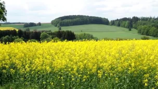 Jarní krajina s polem znásilnění. Pole řepky v květ pod modrou oblohu s mraky. Česká republika