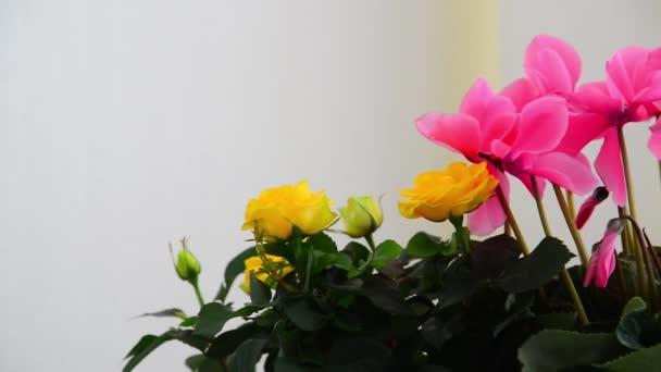 Krásné květiny brambořík, růže a muškát
