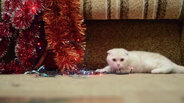 Beige kitten playing with Christmas lights and tinsel