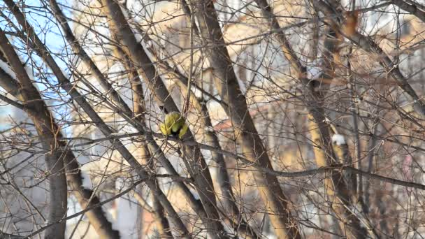 Titmouse sitting on the tree branch in the winter