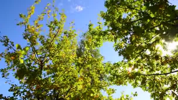 větvičky na pozadí oblohy počátkem podzimu