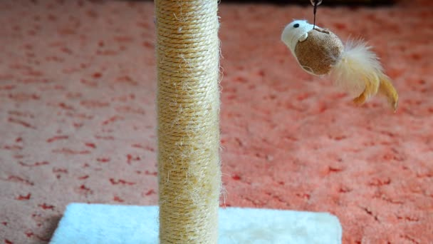 scratching post with a toy for cats