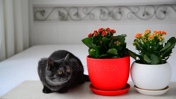 Hervorragend Graue Junge Katze Sitzen Neben Topfpflanzen Blumen U2014 Stockvideo