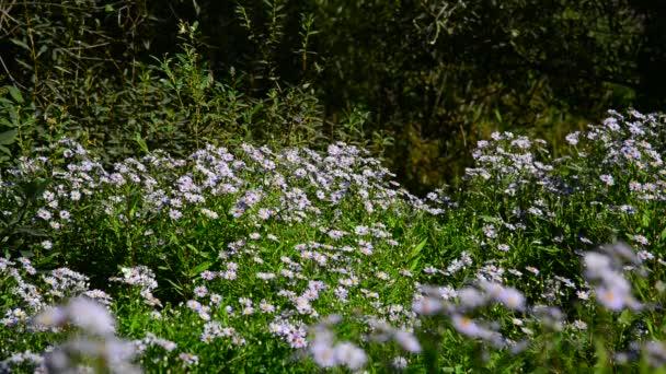 Motýli a můry létají kolem modré květy