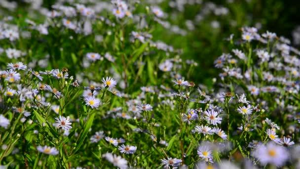 Lepkék és molyok repülni kék virágok