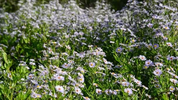 Farfalle e falene volano intorno a fiori blu