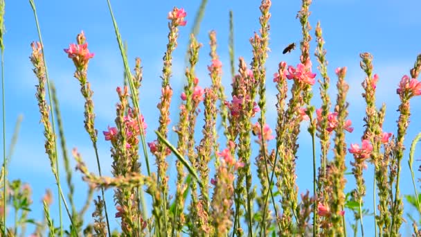 Blossoming heather on background of beautiful sky