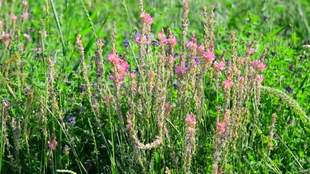 Bee pollinating heather growing on meadow