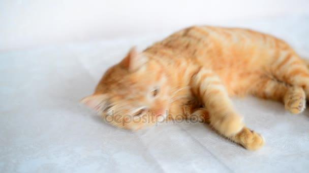 Zrzavý pět měsíc staré kotě s hnědýma očima leží na stole