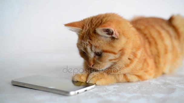 Zrzavý kotě hraje na smartphone s počítačovou herní myš