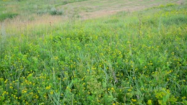 divoká louka s klesáním a roste tráva