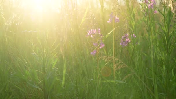 Gyönyörű kilátás a vadon élő fűre és virágokra a naplementében