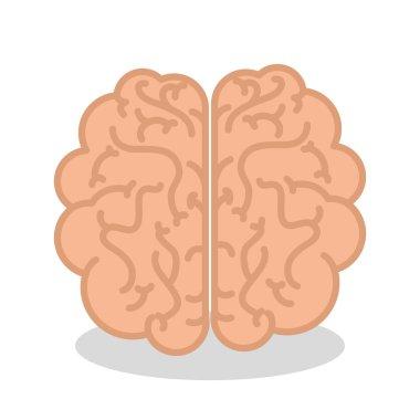 brain human organ isolated icon