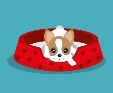 boston terrier lying in red bed