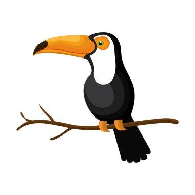 toucan bird exotic icon