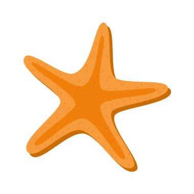 starfish beach isolated icon
