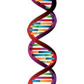 Molecular structure of DNA
