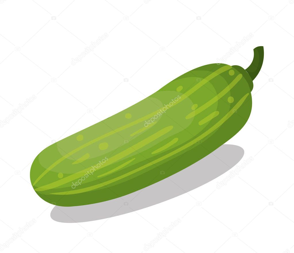 fresh cucumber vegetable isolated icon