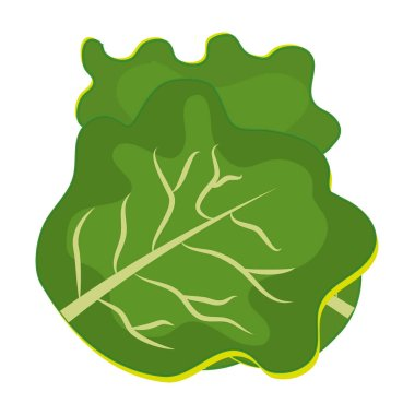 Fresh and green lettuce graphic