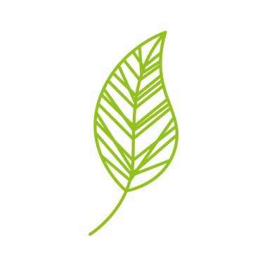 leaf drawing isolated icon
