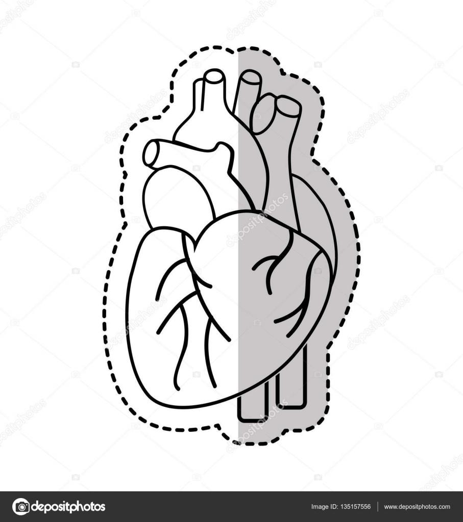 Herz-Organ des Menschen-Symbol — Stockvektor © yupiramos #135157556