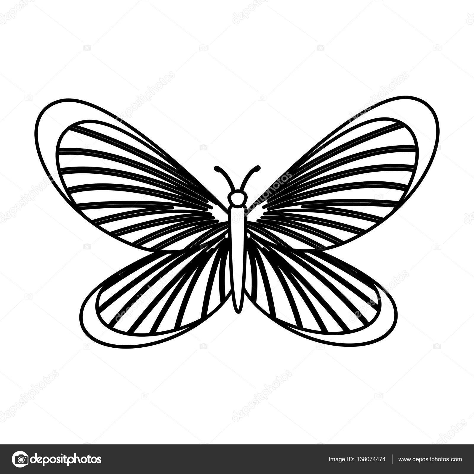 Ausgezeichnet Schmetterling Körper Vorlage Bilder - Entry Level ...