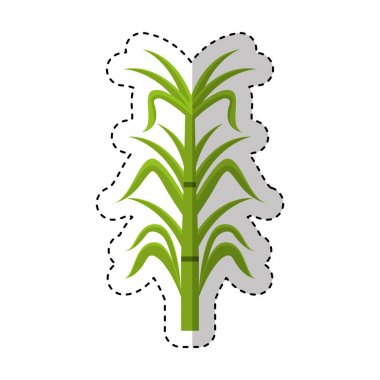 sugar cane isolated icon