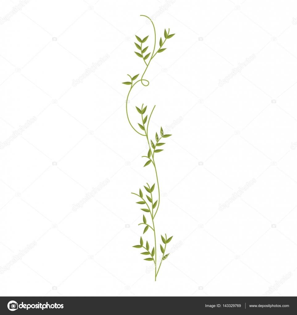 Plante Grimpante Avec Design Nature Feuilles Image